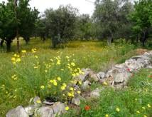 krajina Apulie na jaře